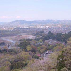 山桜と若葉たち~復路