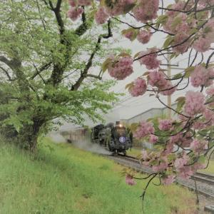 八重桜の頃