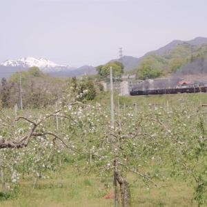 りんごの花の季節