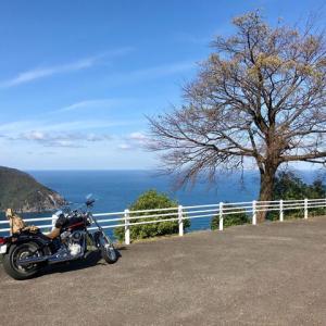 青空とイカ丼と三方五湖、そしてメタセコイア   福井滋賀