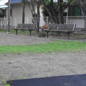 とある公園の野良猫達#12