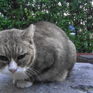 とある公園の野良猫達#11
