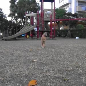 とある公園の野良猫達#15
