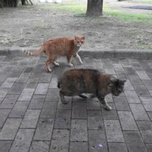 とある公園の野良猫達#16