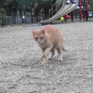 とある公園の野良猫達#10