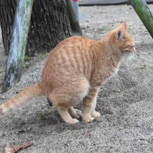 とある公園の野良猫達#9