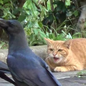 とある公園の野良猫達#4