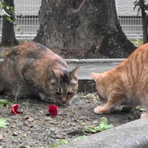 とある公園の野良猫達#8