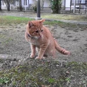 とある公園の野良猫達#17