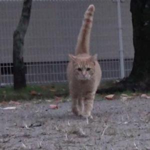 とある公園の野良猫達#2