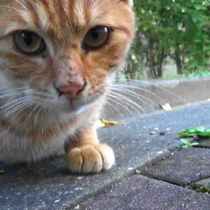 とある公園の野良猫達#1