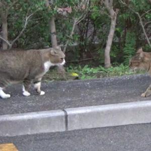 とある公園の野良猫達#5