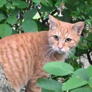 とある公園の野良猫達#6