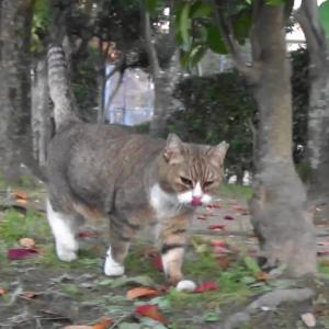 とある公園の野良猫達#13