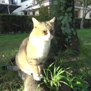 とある公園の野良猫達#7