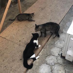 タモ猫社長の戦い