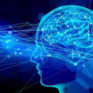 脳は習慣が好き。