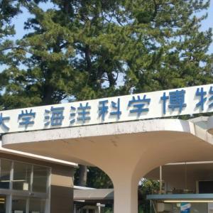 東海大学海洋科学博物館に行ってきたぞ!