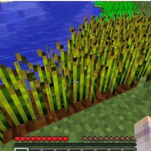 マイクラ 1.12.2 収穫と同時に植え付け
