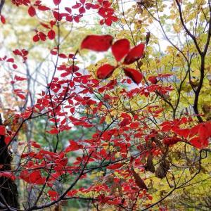 両神山の紅葉はどうだろう