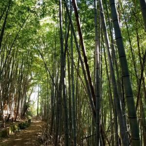横浜の森から 鎌倉へ