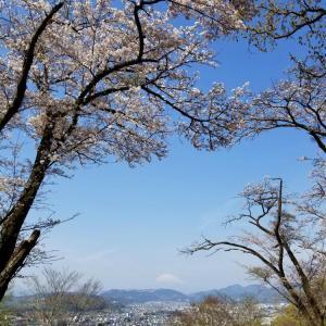 弘法山 桜見歩き