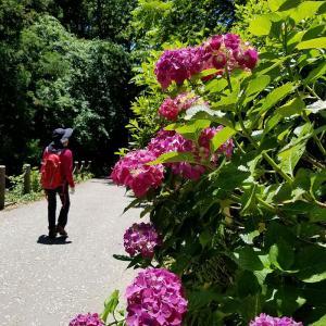 鎌倉 樹ガーデン