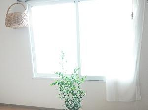 あの頃を再び。カーテンを外しました!そして夏野菜。