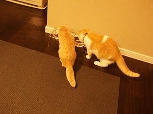 第1弾!ミニマリスト家、猫の愛用品はこれを使っています!
