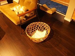 第2弾!ミニマリスト宅の猫用品。