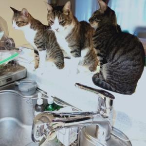 キッチンに集まる理由