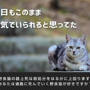 NHKBSププレミアム『家族になろうよ~犬と猫と私たちの未来』に出演します