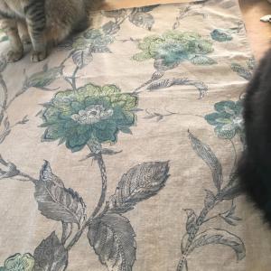 タロットクロスを広げたら、猫が2匹乗ってきた~