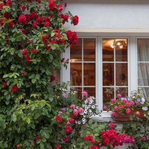 ★☆ フランス画家 薔薇の油絵コレクション ★☆