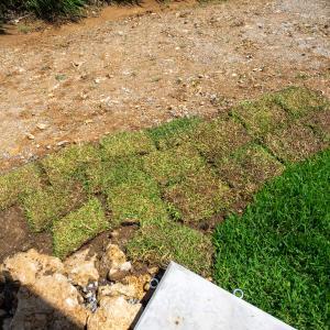 素人が庭に芝張り(セントオーガスチン)やり方とともに紹介します