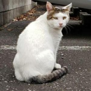 里親さん募集緊急です  TNR済みです 外猫生活卒業したいニャ どなたかレスキューお願いします