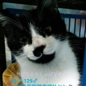 目やにがとれ、かわいい美猫さんに大変身です だっこもできる甘えんぼさんです