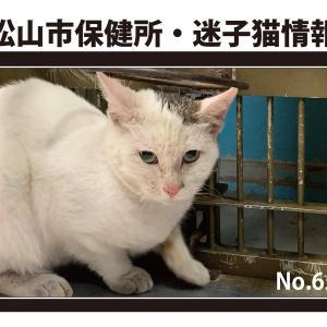 松山市の3匹、23日までの募集です 負傷した猫さん2匹、レスキューお願いします