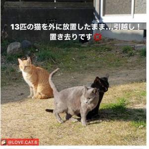 引っ越しで13匹の猫さんたち、置き去りに 里親さん募集中です