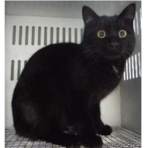 防府からかわいい子猫ちゃん新しい募集です