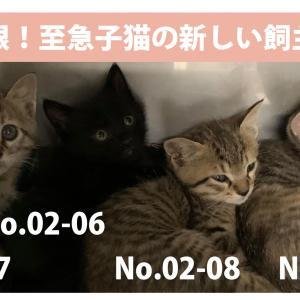 3月3日が期限です 松山市から里親さん急募です