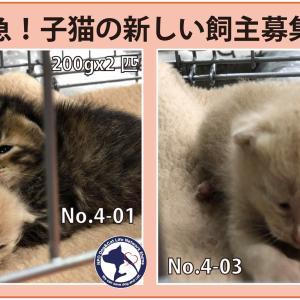 松山市からかわいい子猫ちゃん5匹が里親さん募集中です。期限は4月9日です