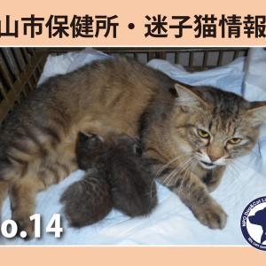 松山市 子猫ラッシュです 明後日期限のコまず命がつながりますように