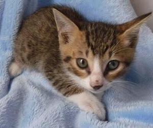 萩センターからかわいい子猫たち4匹が里親さんを探しています