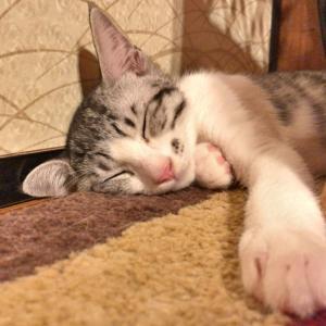 あなたが悲観的なのは脳の疲労が原因かも〜睡眠不足と不幸の深い関係