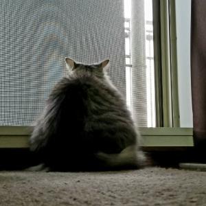 猫のフォルムはおもしろい