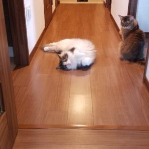 二度見するアッシュの寝相とレオの白目