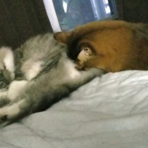 みんなで仲良く昼寝タイム