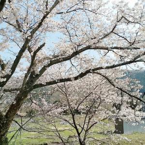 追記アリ☆【雑記帳】春と秩父の名水♡