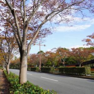 欅の道パークロード
